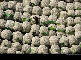 PUZZLE : WORKER RESTING AMONG COTTON BALES, IVORY COAST